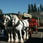 Project-Dommelsch-bierwagen met paarden-wagenmakerij-Verweij